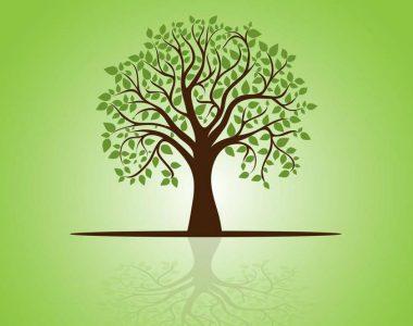 יער האקלים